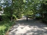 Nie będzie masowej wycinki drzew na plantach. Miasto Kalisz chce modyfikacji planu rewaloryzacji