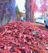 Dziesiąta: Jesienne przepychanki wokół sprzątania liści