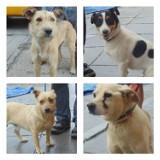 Psy w schronisku w Raciborzu czekają na właścicieli [ZDJĘCIA]