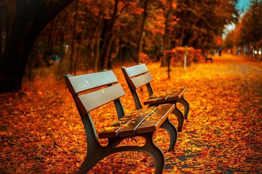 Jesień w tym roku nas rozpieszcza. Dziś na termometrach...