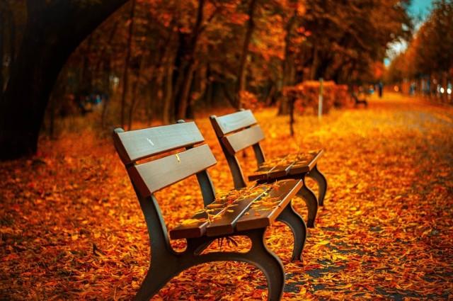 Jesień w tym roku nas rozpieszcza. Dziś na termometrach zobaczymy 20 stopni.