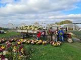 """Lubliniec. Tysiące kwiatów pójdą na straty? Producenci zrozpaczeni. Zrobili z kwiatów napis """"RATUNKU"""""""