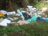 Brali pieniądze za wywóz śmieci, a wyrzucali je do lasu