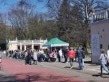 Śląskie ZOO w Chorzowie przyciągnęło tłumy ludzi. Można oglądać np. wielki powrót pingwinów