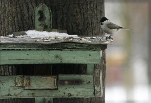 Karma dla ptaków będzie rozdawana 10 grudnia.