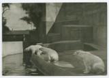 """""""Zwierzęta w Warszawie. Tropem relacji"""". Czego dowiemy się o zwierzętach na wystawie w Muzeum Warszawy?"""