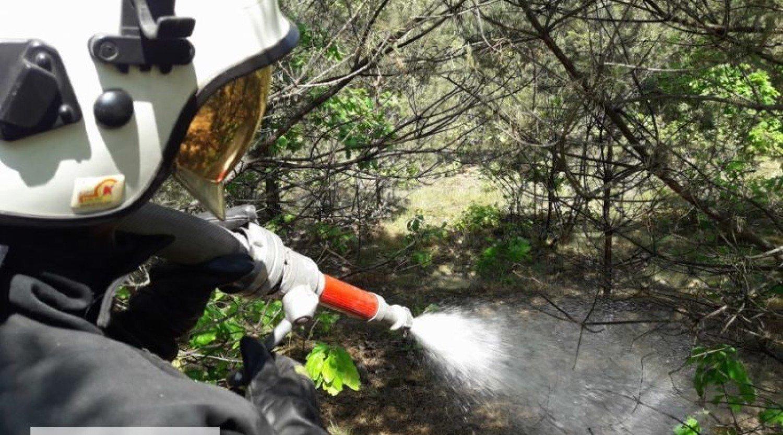 Pożary Lasów W Gminach Rozprza I Ręczno To Było Zaprószenie Ognia