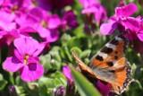 Wiosna w obiektywie Piotra Sikory! Nasz Czytelnik podzielił się z nami zdjęciami wiosennego ogrodu [ZDJĘCIA]