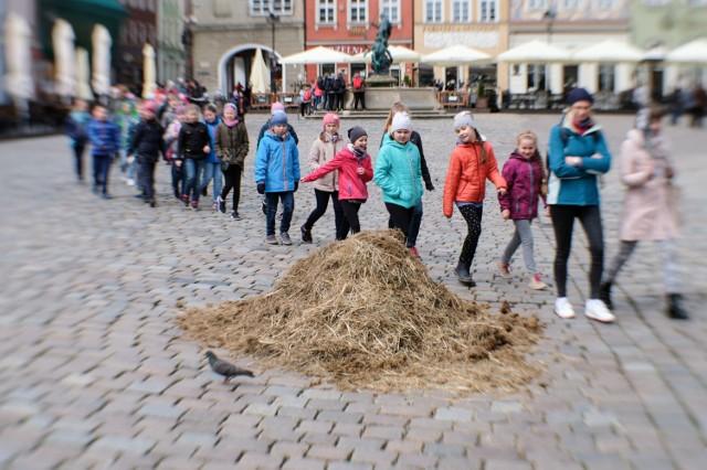 Czy w Poznaniu grasuje słoń?