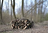Miasto, leśnicy i przyrodnicy zawarli porozumienie w sprawie Lasu Zwierzynieckiego w Tarnobrzegu: Nie będzie zaplanowanych cięć rębnych