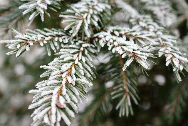 Dziś na termometrach zobaczymy jeden stopień. Zapowiadane są też opady deszczu ze śniegiem.