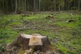 Aktywiści składają petycję. Nie zgadzają się na wycinkę ponad 3000 drzew na Woli
