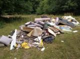 Bomba ekologiczna w Leśnictwie Boduszewo. Porażająca liczba śmieci w lesie
