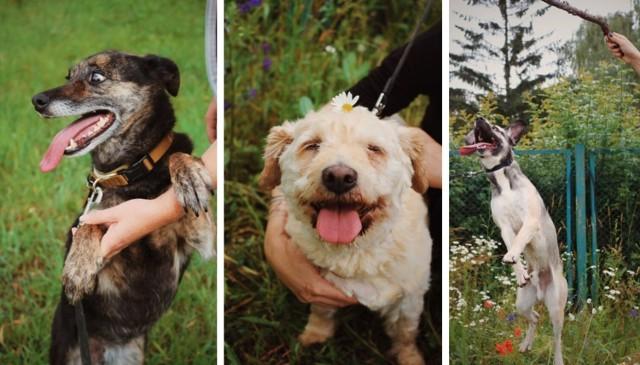 Uwaga! Osoby zainteresowane adopcją psa ze schroniska w Inowrocławiu proszone są o wcześniejszy kontakt z lek. wet. Wiesławem Borkowskim pod nr tel. 501 37 37 35