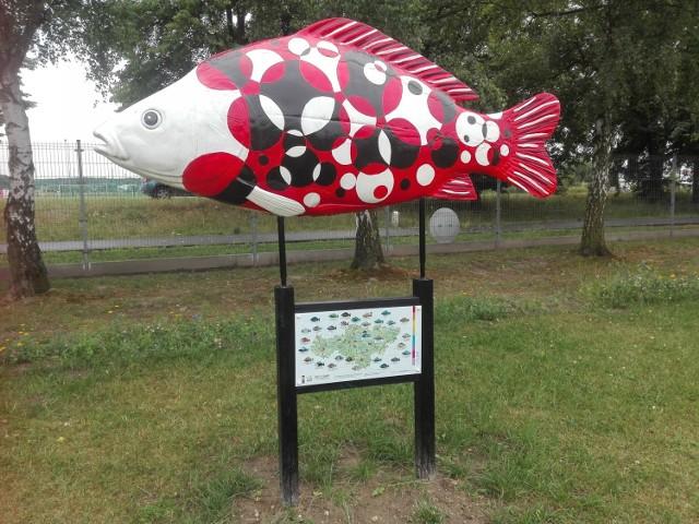 """To jest ryba przy Muzeum Bombki, które warto odwiedzić nie tylko przed świętami. Działa cały rok. Kliknij w przycisk """"zobacz galerię"""" i przesuwaj zdjęcia w prawo - naciśnij strzałkę lub przycisk NASTĘPNE"""