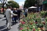 Festiwal Róż w Łasku  odwołany. W tym troku też nie będzie wydarzenia