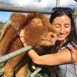 Te krowy myślą, że są psami! Łaszą się i przytulają do ludzi [GALERIA]