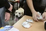 """Nietypowy finał prelekcji Straży Granicznej w pow. tarnogórskim. Pies """"oznaczył"""" uczniów z narkotykami"""