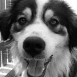 W gminie Nowinka ruszają szczepienia psów. Nie przegap terminów