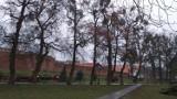 Na sesji Rady Miasta Chełmna dyskutowano o wycince starych drzew
