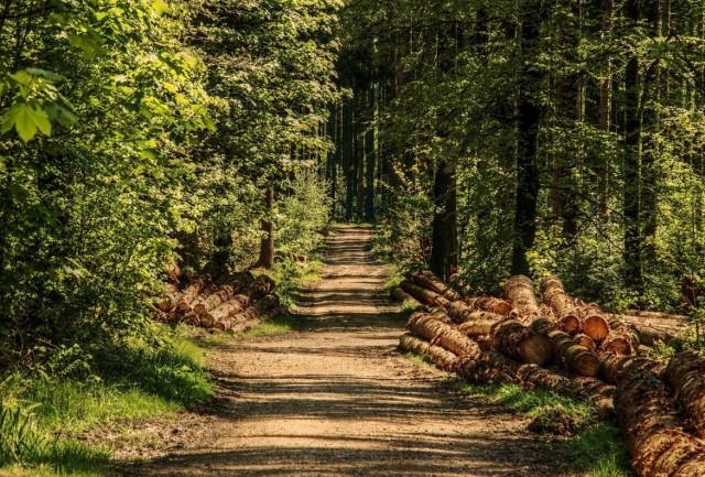 Osoby odbywające karę pozbawienia wolności w areszcie śledczym oraz w zakładach karnych podlegających dyrektorowi Okręgowemu Służby Więziennej w Bydgoszczy będą pracować dla lasów państwowych