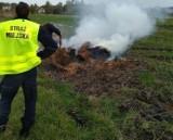 Straża Miejska w Radomiu z pomocą drona namierzyła wypalających śmieci na Starej Woli Gołębiowskiej