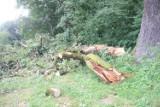 Wichura zniszczyła 270-letni pomnik przyrody nad Wisłokiem w Krościenku Wyżnym. Czy dąb Aleksander przeżyje? [ZDJĘCIA]