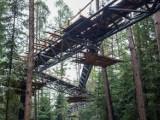 Stary Sącz. Ścieżka w koronach drzew będzie wielką atrakcją turystyczną miasteczka [ZDJĘCIA]