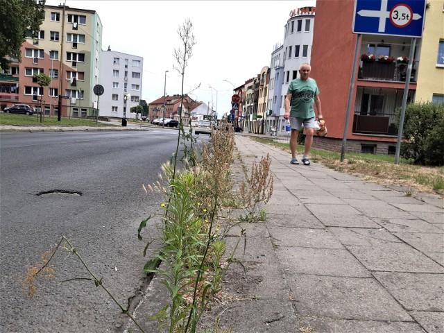 Chwasty rosnące na ul. Konopnickiej w Goleniowie sięgają dorosłemu człowiekowi powyżej pasa