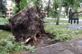 Wichura wyrywała drzewa z korzeniami i łamała jak zapałki