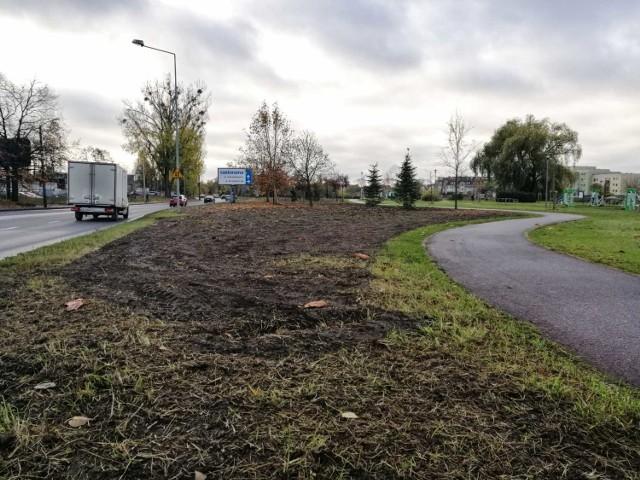 Łąki kwietne w Szczecinie już zasiane.