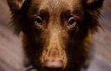 Koronawirus: ludzie ze strachu porzucają zwierzęta. WHO: Nie ma dowodów na zarażanie zwierząt
