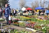 Na targu w Wągrowcu czuć już wiosnę. W sprzedaży kwiaty, sadzonki, młode drzewka i wiele innych