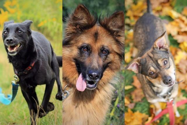Są cudowne, ale samotne i szukają właściciela o dobrym sercu. Psy ze schroniska w Białymstoku przy ul. Dolistowskiej czekają na nowy dom.