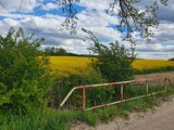 Urocze widoki za miastem. Warto wybrać się na spacer do gminy wiejskiej Starogard Gdański ZDJĘCIA