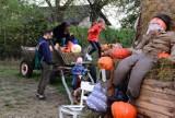 Tłumy na Dyniowej Farmie w Obórzni pod Łabiszynem. Zobaczcie zdjęcia