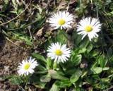 Wiosna w Ustce nie zna koronawirusa [ZDJĘCIA]