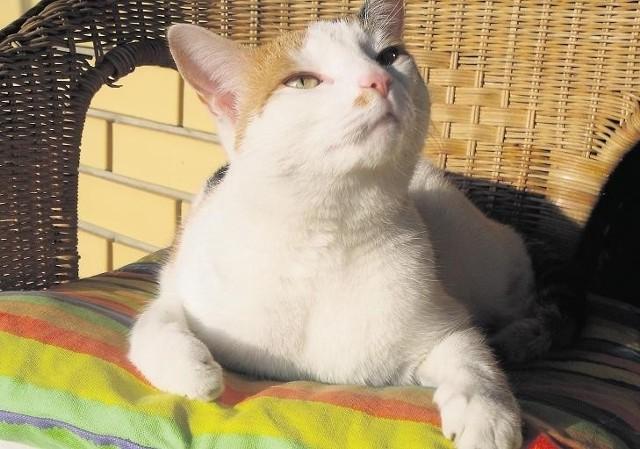 Złodziejom przeszkodziła kotka, tylko ona słyszała włamywaczy i podniosła alarm. Domownicy spali.