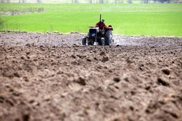 Rolnicy zamiast przygotowywać się do żniw muszą teraz zaorać zniszczone uprawy.