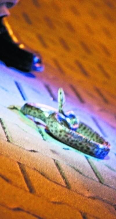 Wąż boa znaleziony na ul. Sienkiewicza trafił do zoo