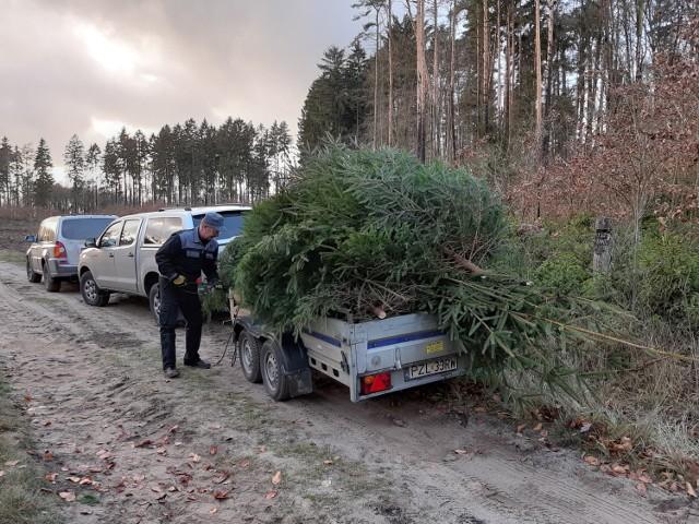 Pilscy leśnicy przekażą za darmo ponad 700 choinek
