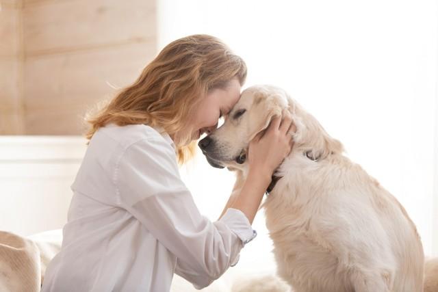 Co kryje w sobie pies? Skoro to najlepszy przyjaciel człowieka, warto wiedzieć o nim wszystko. Poznaj ciekawostki, o których na pewno nie miałeś pojęcia!