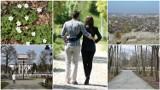 Tarnów. Najlepsze miejsca na wiosenny spacer w Tarnowie i regionie. TOP 10. Tutaj odpoczniesz i pooddychasz świeżym powietrzem