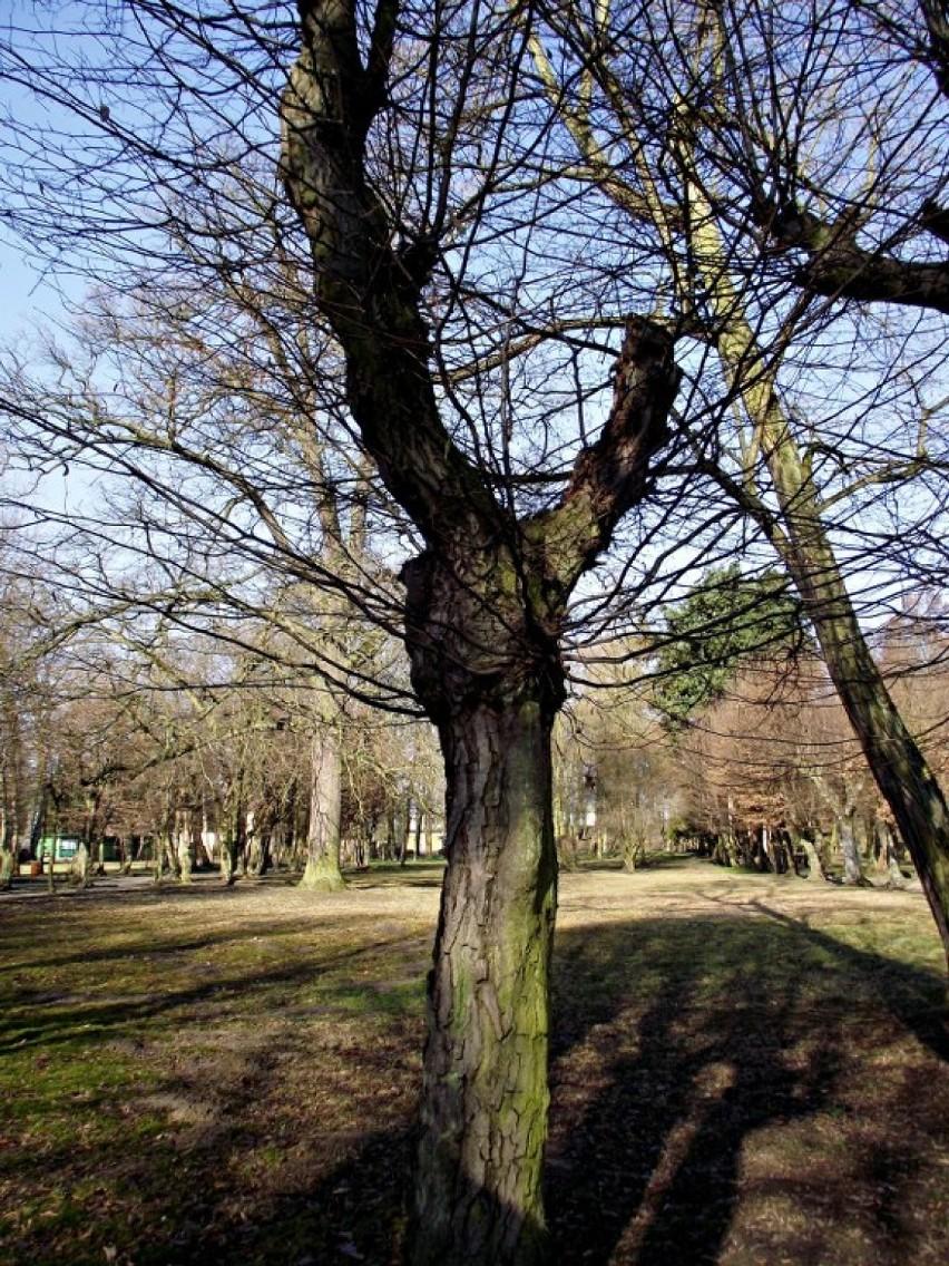 Park Miejski Zbąszyń
