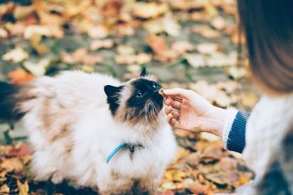 Czym można się zarazić od psa i kota? Sprawdź, jakie choroby przenoszą nasi pupile i jak im zapobiec