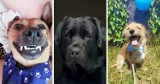 Światowy Dzień Psa. Nasi Czytelnicy pokazali nam swoich czworonożnych przyjaciół! Zobaczcie wyjątkową galerię zdjęć [ZDJĘCIA]