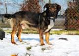Psy z tarnowskiego azylu czekają na nowy dom. Pomóż odmienić ich los