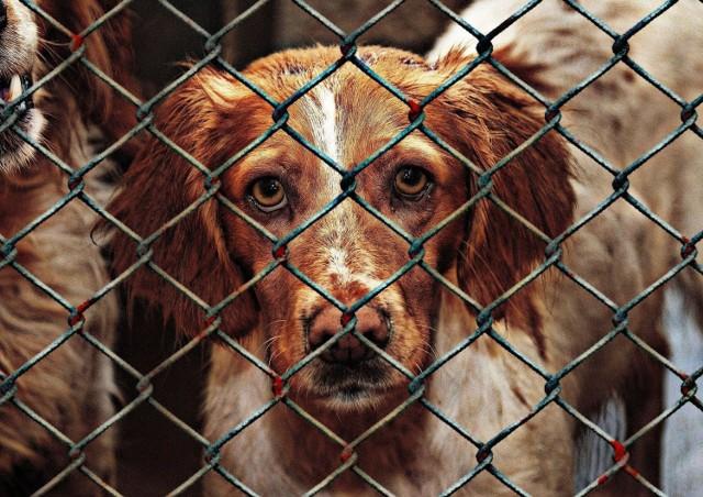 Zobaczcie, jakie psy w Bydgoszczy czekają na swoich właścicieli. Bydgoska Straż Miejska informuje o odnalezionych czworonogach na terenie miasta.   Zobacz zdjęcia i opisy >>>