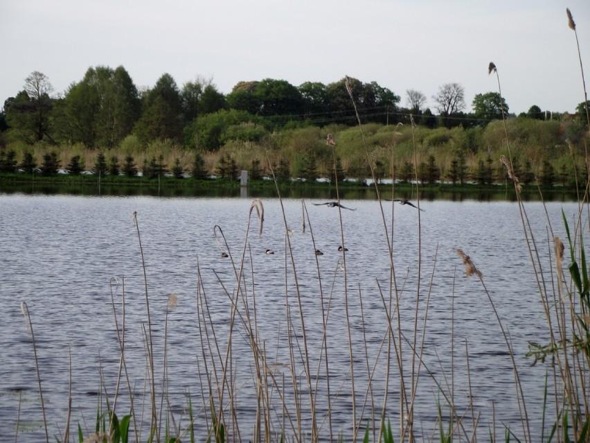 Natura 2000.  Ścieżka rowerowa Zbąszyń - Nądnia
