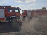 Pożar ścierniska i zboża na pniu w Gręboszycach